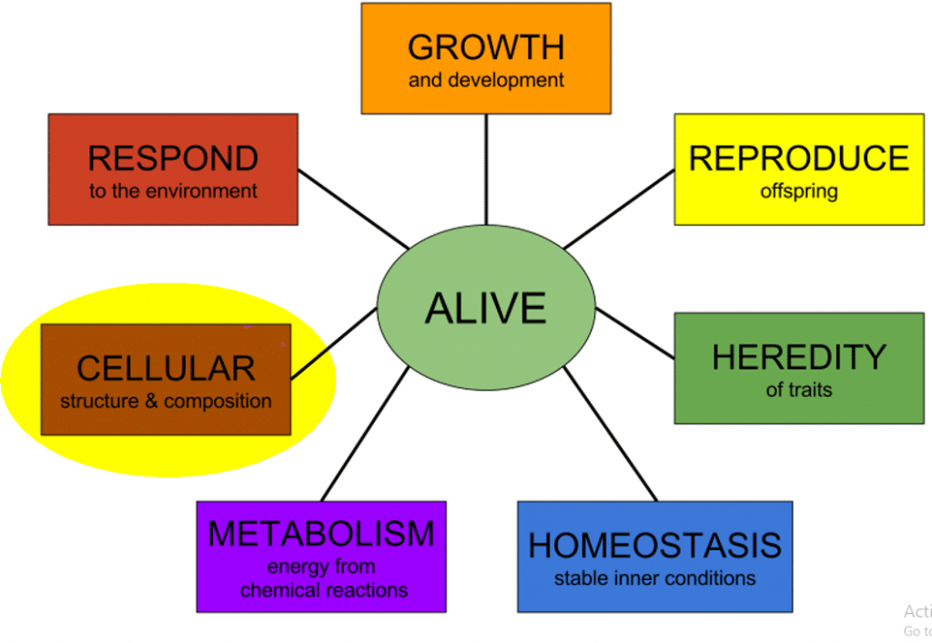 Eight Characteristics of Life in Biology